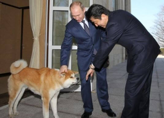 プーチンの愛犬ゆめ