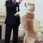 プーチンは動物好き?秋田犬の名前は?手なずけられた動物まとめ!