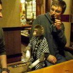 サルの居酒屋かやぶきの場所は栃木県宇都宮のどこ?時間帯やメニューは