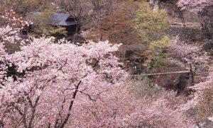 春の宝川温泉