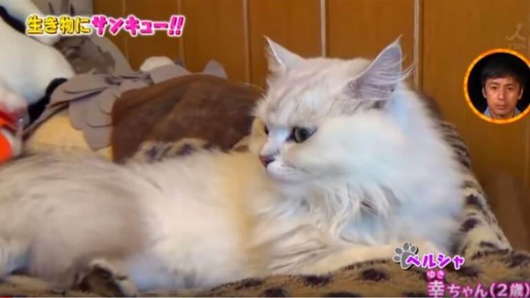赤崎あかりの猫