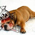 犬の車酔いの症状や原因と予防対策や車に慣れさせる方法!
