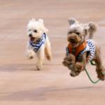 犬の断尾や断耳を行うのはなぜ?その理由や犬種と時期や費用も紹介!