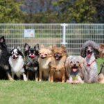 愛犬とのコミュニケーションの取り方と信頼関係の築き方や作り方!