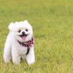 子犬のおすわりのしつけ方の方法!簡単な教え方や犬のトレーニング
